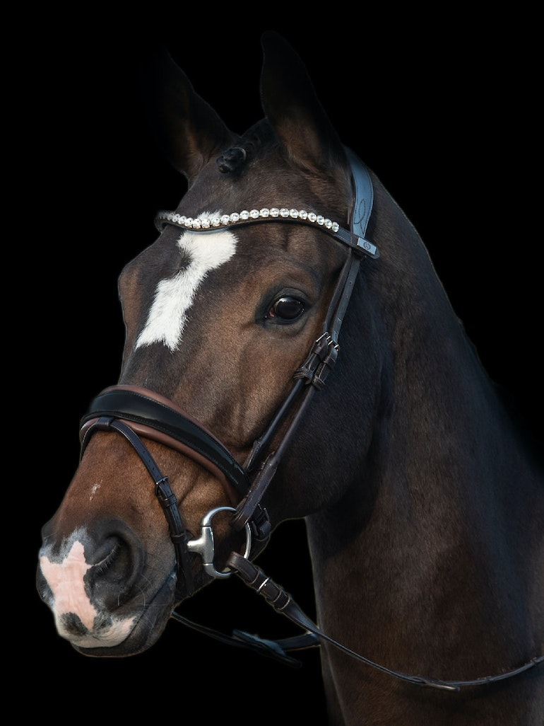 GP Bridle with Brown Padding